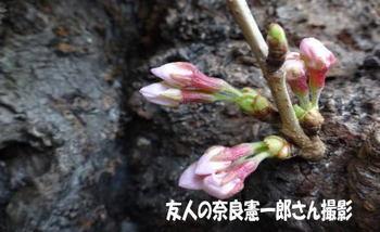3-nara-san.jpg